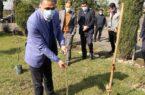 غرس چند اصله نهال توسط مسئولین پخش فرآورده های نفتی منطقه گیلان